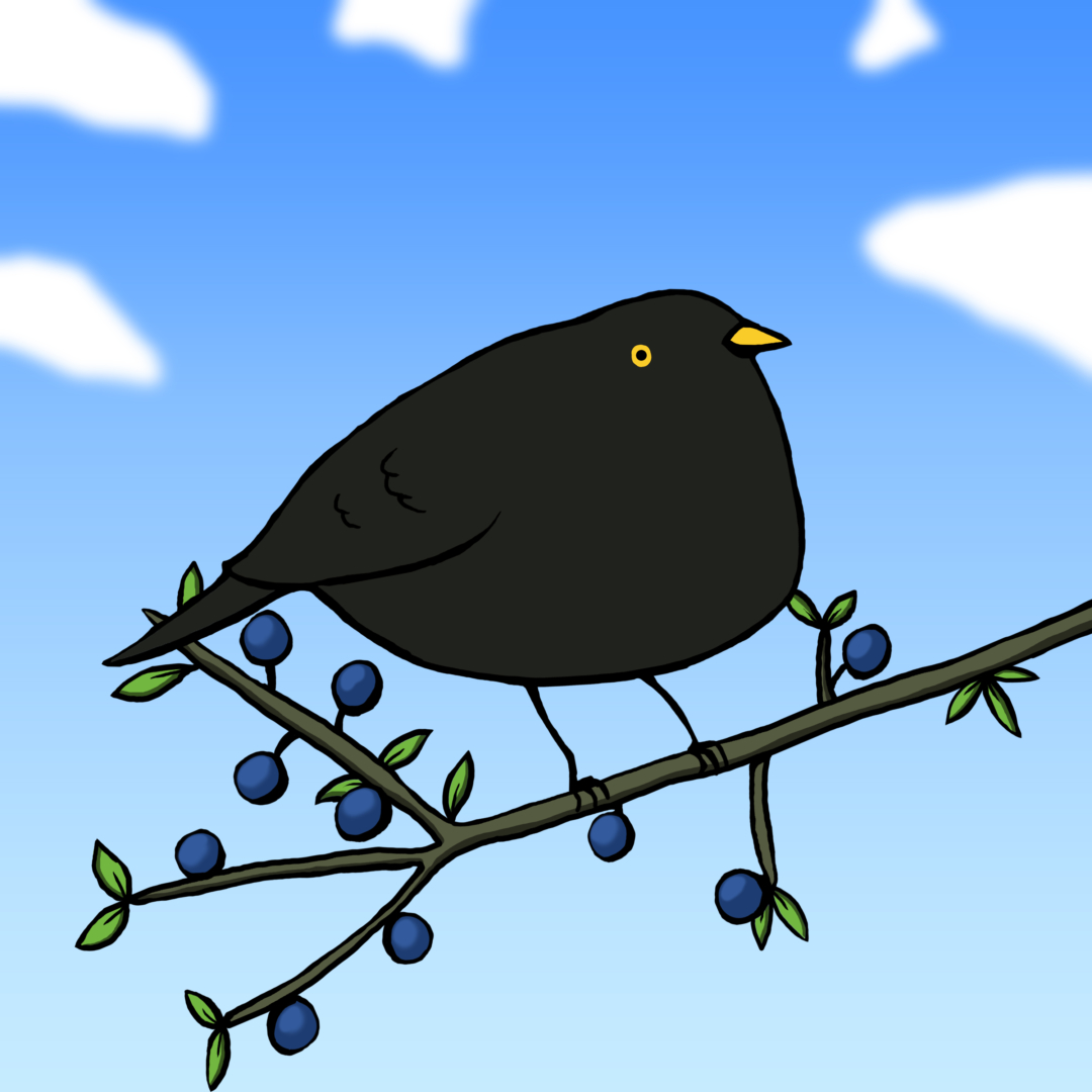 Blakcbird, Bird, Sloe, Tree